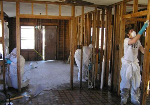 templar mold removal toronto