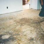 white mold on carpet