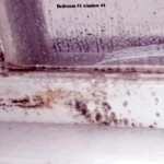 How Do You Know If You Have Black Mold