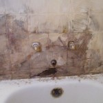 Mold in shower review