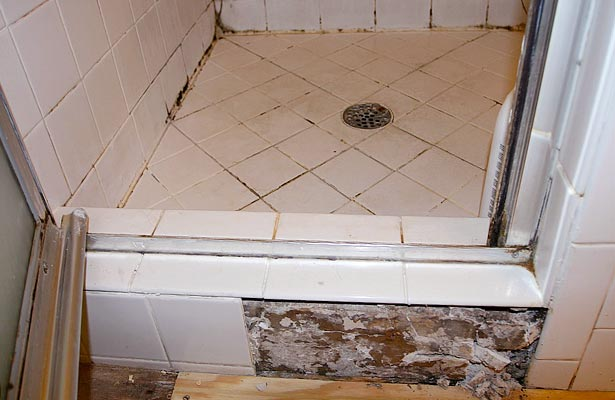 best cleaner for mold and mildew in shower