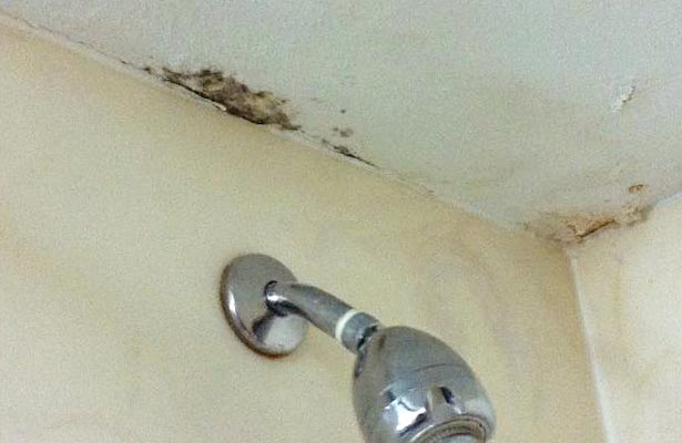 best mold and mildew remover for shower