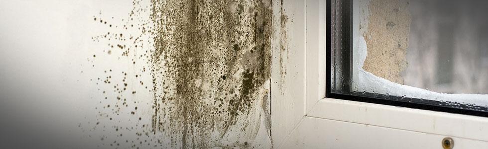 Black Mold On Window