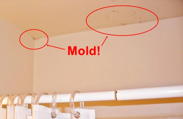 can you get rid of mold in a home
