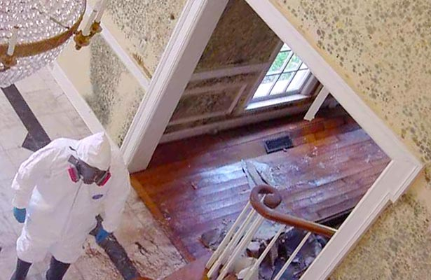 can you get rid of mold in your home