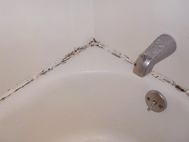can't get rid of mold in shower