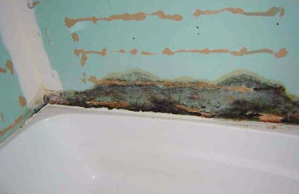 dangers of black mold in basement