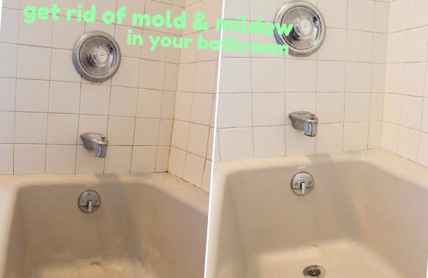 Black Mold In Bathroom Health Hazard dangers of black mold in home and bathroom | orange mold