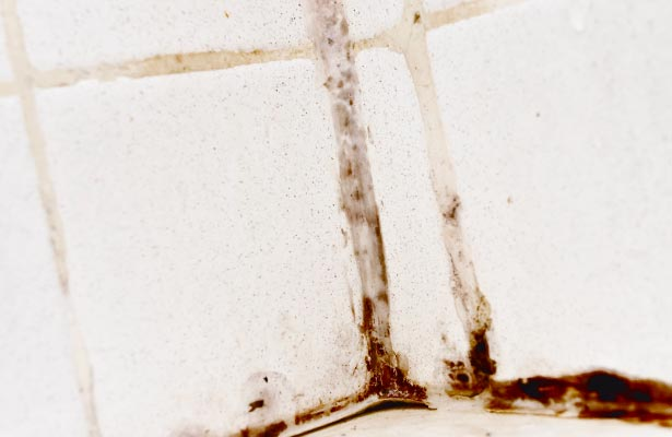 dangers of black mold on walls
