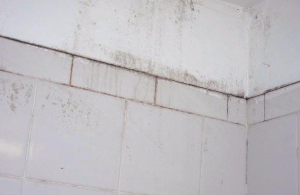 dangers of black mold spores