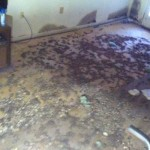 Effects of Mold in the Home