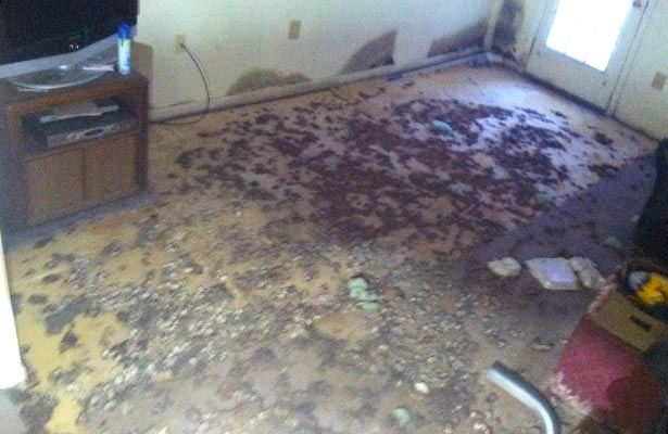 effects of black mold in the home