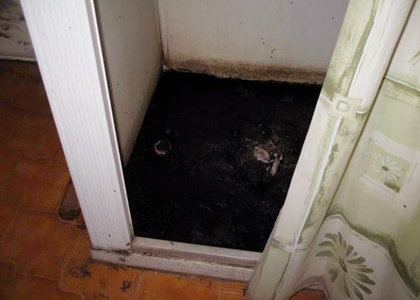 get rid of mold above shower