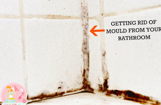 get rid of mold in air