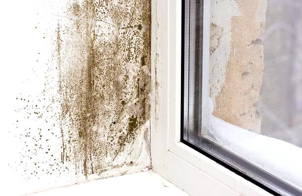 get rid of mold in grout
