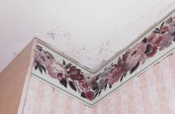 get rid of mold in shower caulk