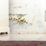 get rid of mold spores