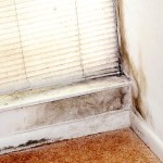 get rid of moldy smell