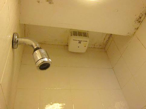 get rid of pink mold in shower