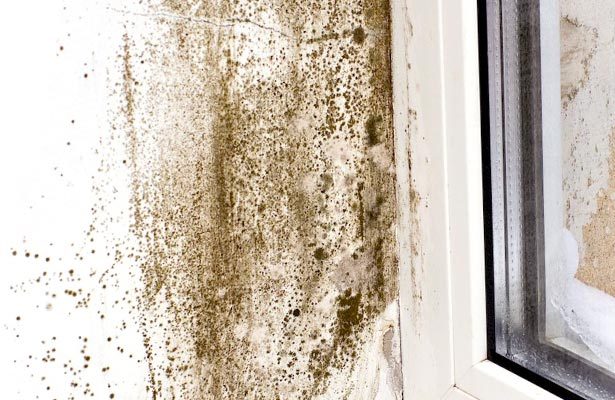 how can you tell if black mold is toxic