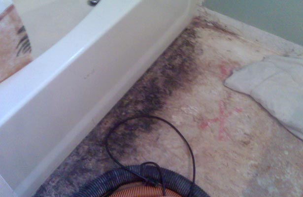 how can you tell if you have toxic black mold