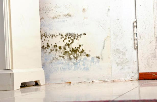 how do i tell if black mold is toxic or how to tell if it is toxic mold