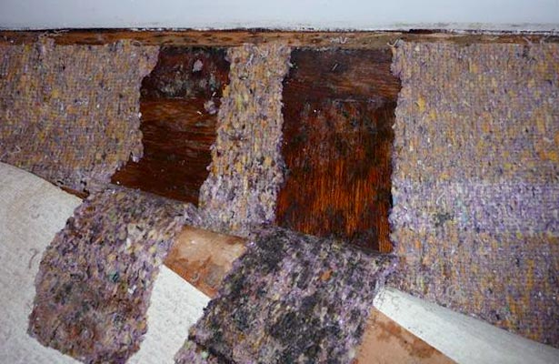 how do you find black mold in your home and test for black mold in your home