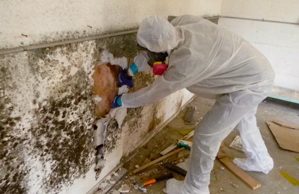 how do you get rid black mold