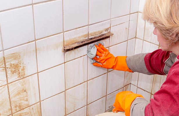 how do you get rid of mold