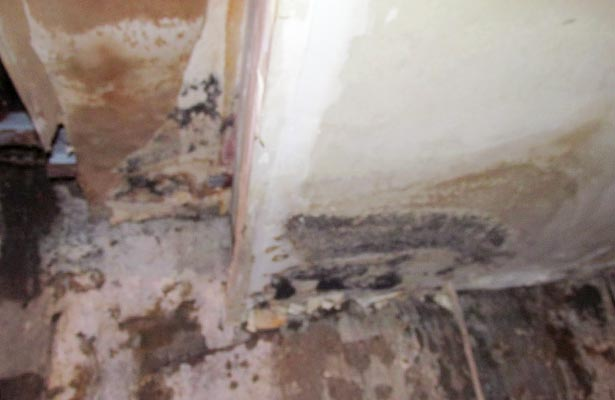 how do you if you have black mold