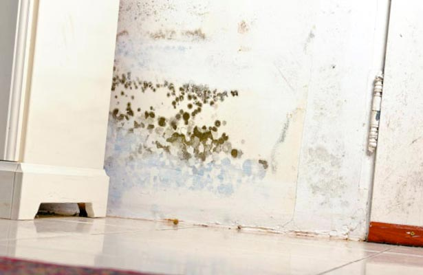 how do you know if you have a black mold problem