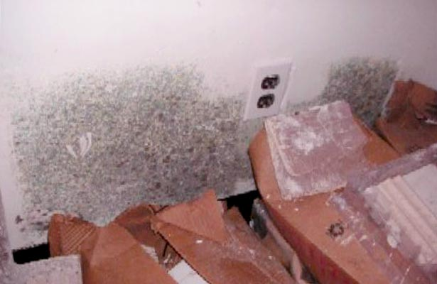 how do you know if you have been exposed to black mold
