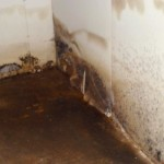 how do you know if you have black mold in your basement