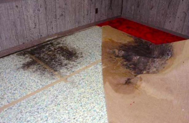 how do you know if you have black mold in your lungs