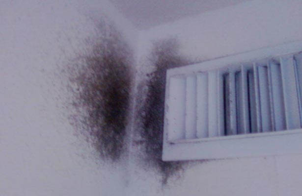 how do you know if you have mold