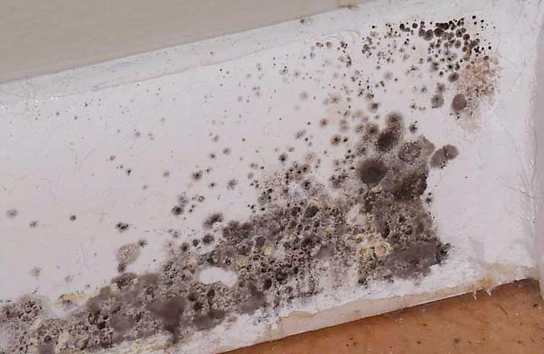 how do you remove black mold from ceiling