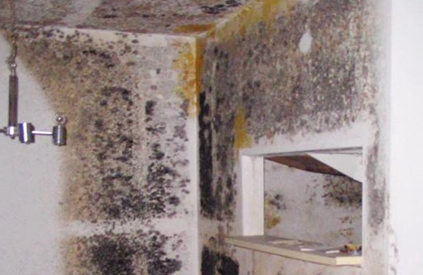 how do you remove black mold from clothes