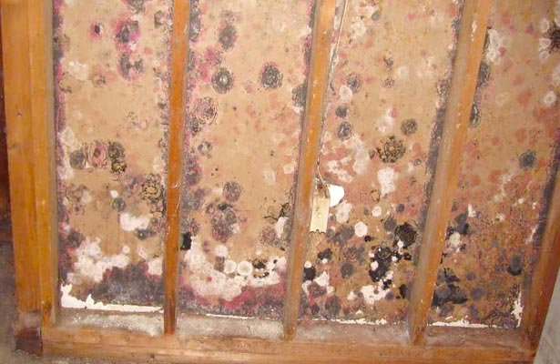 how do you remove black mold from shower