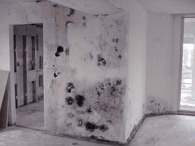 how do you tell if black mold is toxic and how to tell if mold is toxic