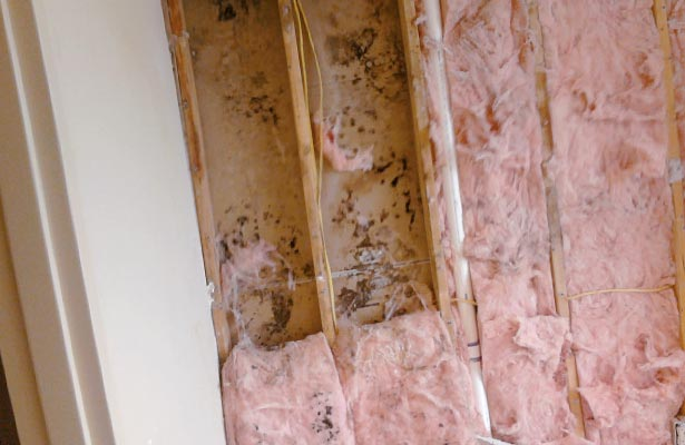 how do you treat black mold poisoning