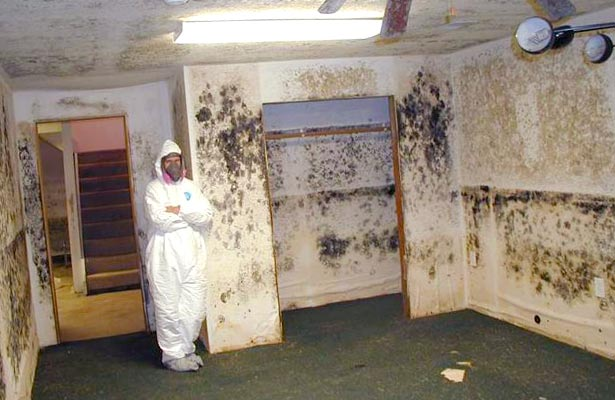 how to check for mold and mildew in your home