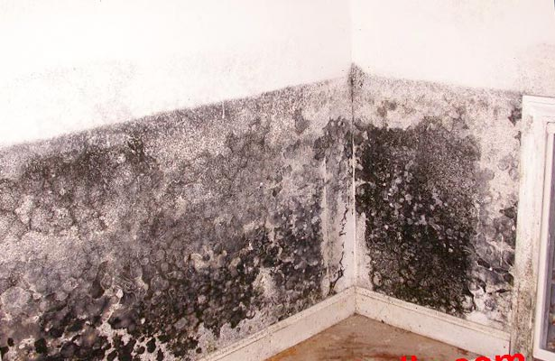 how to clean black mold off a wall