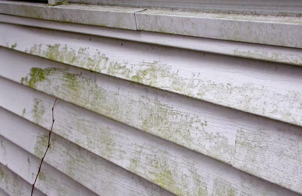 how to clean black mold off painted walls