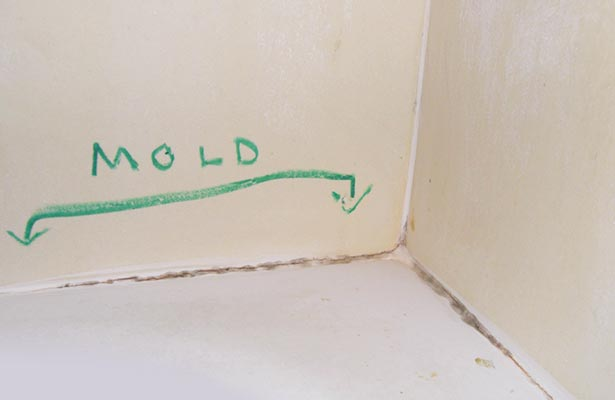 how to get mold off shower curtain liner