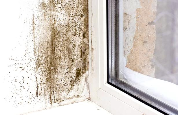 how to get rid of black mold in home