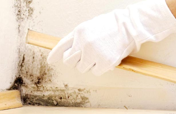 how to get rid of mold in old homes