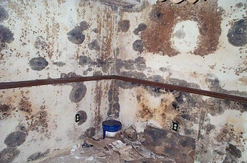 how to tell if mold is toxic black mold