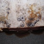 Health Effects Of Mold and Mildew In the Home