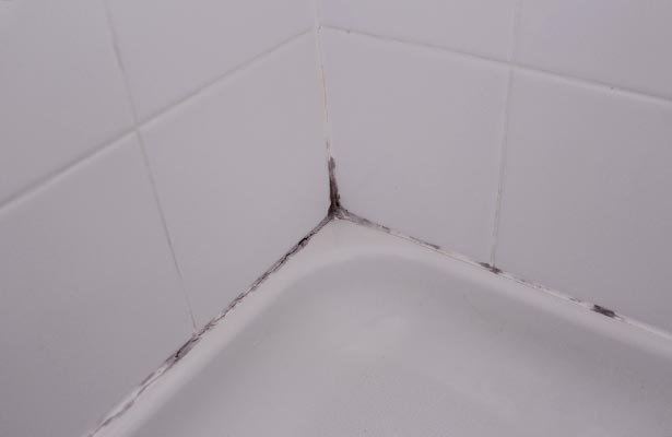 natural cleaner for mold and mildew in shower
