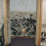 secret to Know If You Have Black Mold